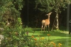 Sleepy Hollows - Sleepy Hut - Front - With Deer