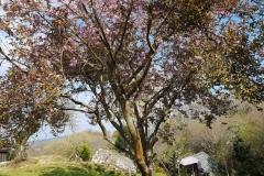 Sleepy Hollows - Sleepy Hut - Side - From Cherry Tree
